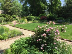 CRG paths and rose